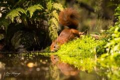 Squirl | Eekhoorn