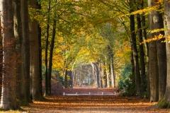 Autumn in 'Oude Warande' - Tilburg