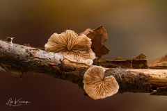 5D4_8186_Stacked