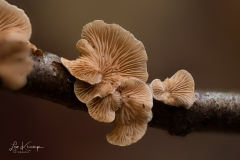5D4_8286_Stacked