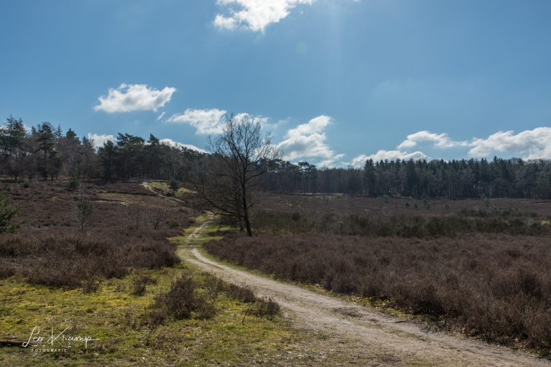 5D4_8890-HDR