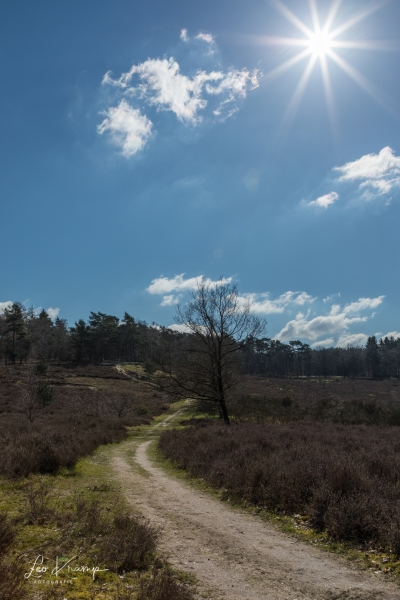5D4_8895-HDR