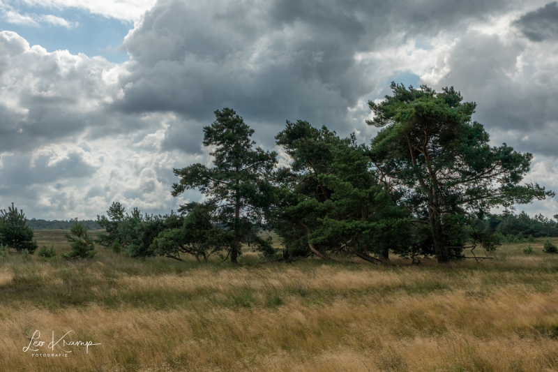 5D4_0172-HDR