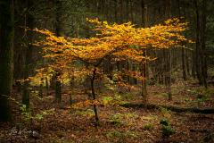 Autumn   Herfst Leuvenumse bos