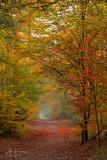 Autumn   Herfst Kaapse bossen