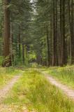 Forest path - Portrait -Focus Stack