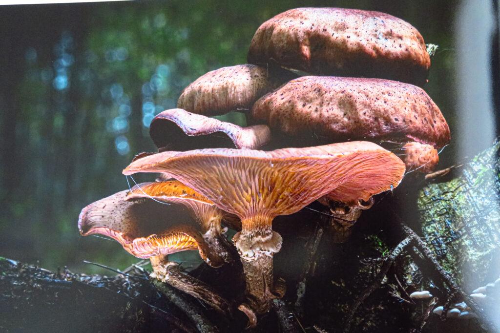 Fotofabriek paddenstoel